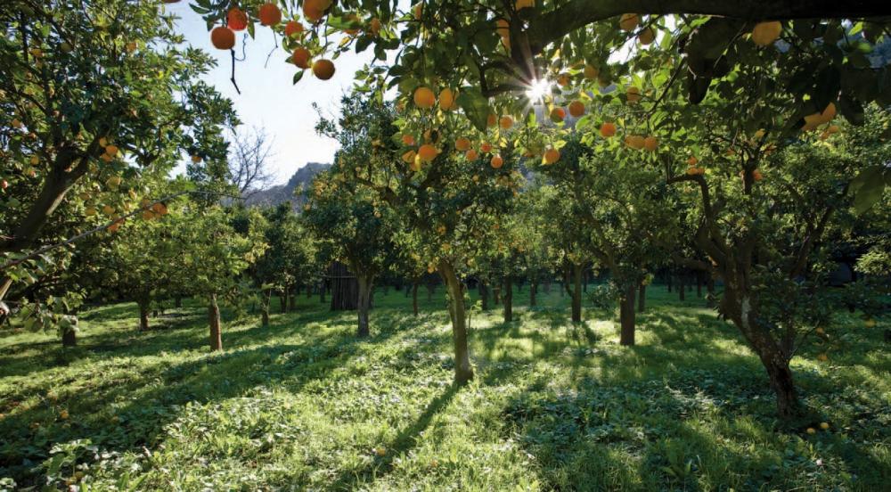 frutteto_alberi
