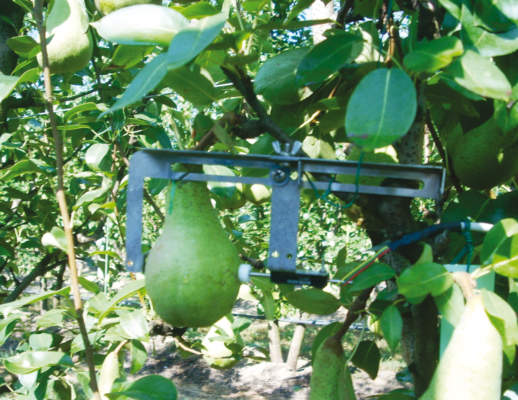 Foto 1- Sensore in grado di misurare piccole variazioni del diametro del frutto