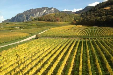 Ricerca su viti resistenti in Alto Adige