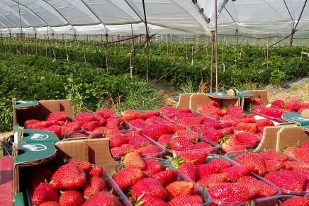 I mercati premiano la qualità, varietà e tecniche colturali si adeguano