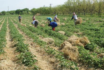 Serbia e Romania: quali prospettive di espansione colturale?