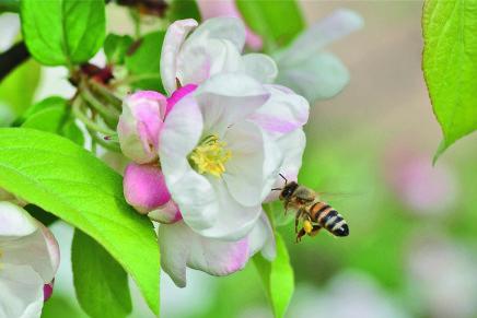 In forte calo la produzione di miele: quali sono le possibili cause?