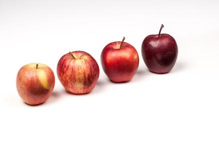 Tante nuove varietà di mele, quali avranno un futuro?