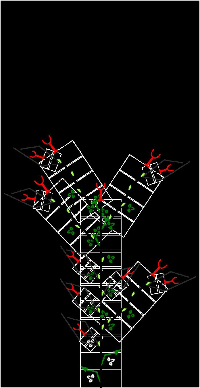 fragola, materiale, propagazione