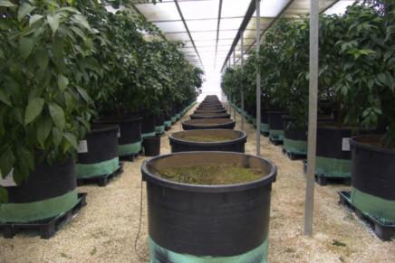 La certificazione delle piante di agrumi verso il futuro assetto comunitario