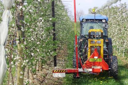 Il punto sul diradamento chimico e meccanico del melo