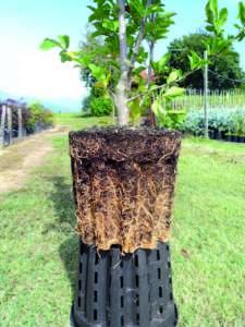 vasi ercole pasquini e bini frutticoltura