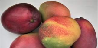 frutti di mango