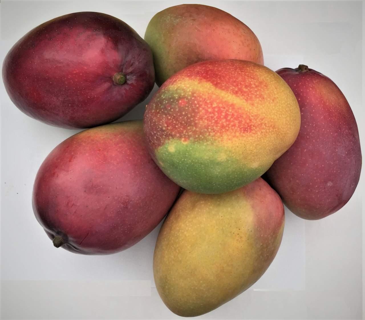 """Come Piantare Il Mango colture tropicali in clima mediterraneo, ecco il mango """"made"""