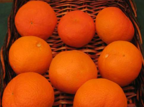 mandarino-simili