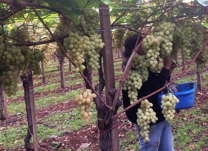 Spagna congresso uva