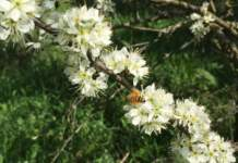 apicoltura italiana