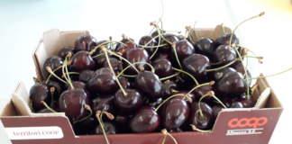 varietà frutticole