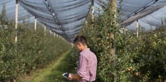 frutticoltura digitalizzata